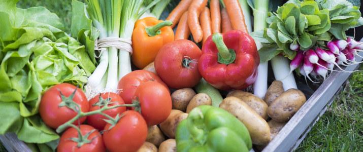 harvest bio salad leek tomatoes potatoes carrot food